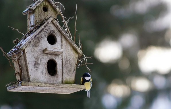 Picture background, bird, house