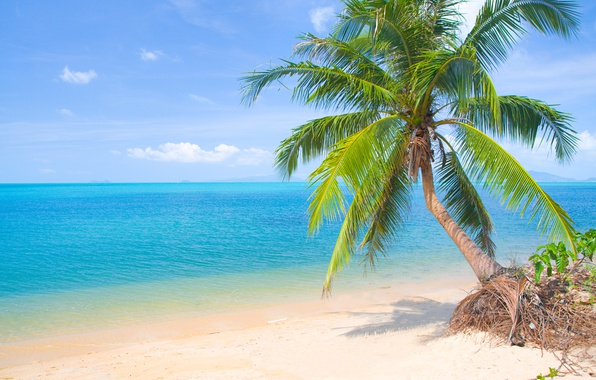 Photo wallpaper the sun, tropical, summer, sea, sand, sea, sand, beach, palms, beach, shore, island, paradise, palm ...