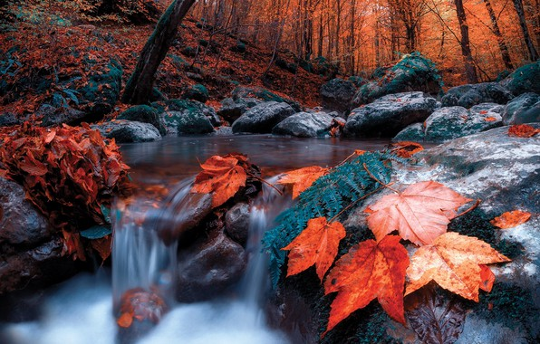 Picture autumn, forest, leaves, trees, landscape, nature, stream, stones, for