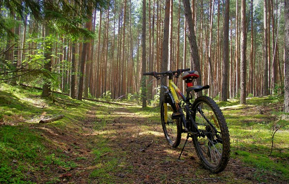 Picture forest, summer, nature, bike, day, solar