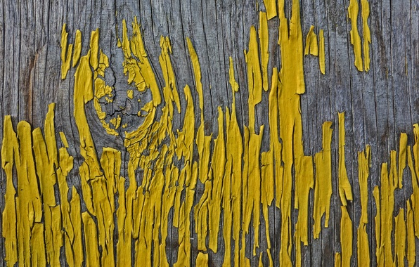 Picture background, tree, paint
