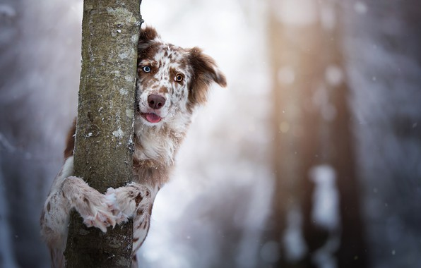 Picture look, tree, dog, trunk, bokeh, The border collie