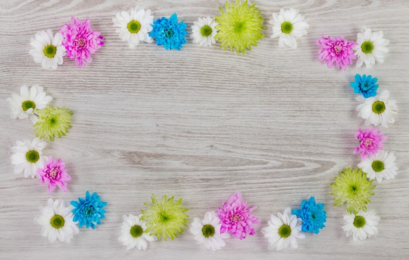 Picture flowers, colorful, white, chrysanthemum, wood, blue, pink, flowers, frame
