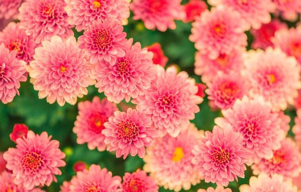 Picture flower, blossom, beautiful, garden, petal, bloom, floral