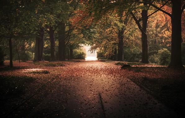 Picture autumn, the city, Park