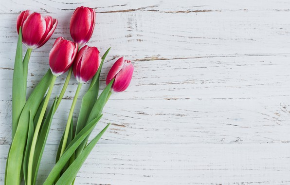 Picture flowers, tulips, pink, fresh, wood, pink, flowers, tulips, spring