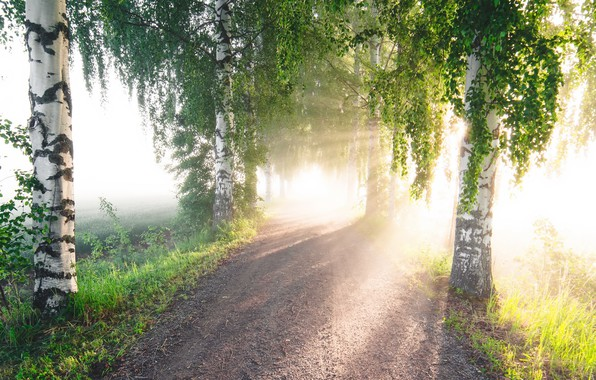 Picture road, summer, light, fog, morning, birch