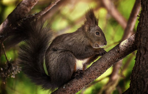 Picture branches, tree, protein, rodent