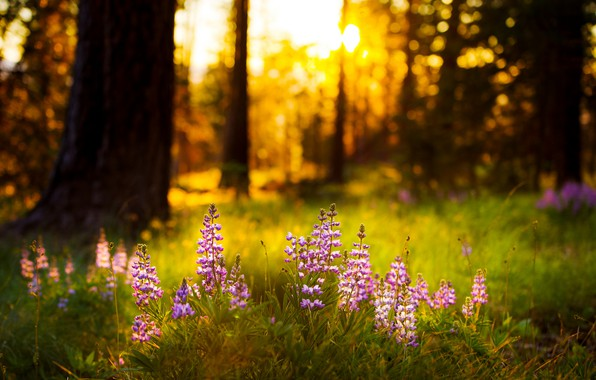 Picture forest, summer, light, flowers