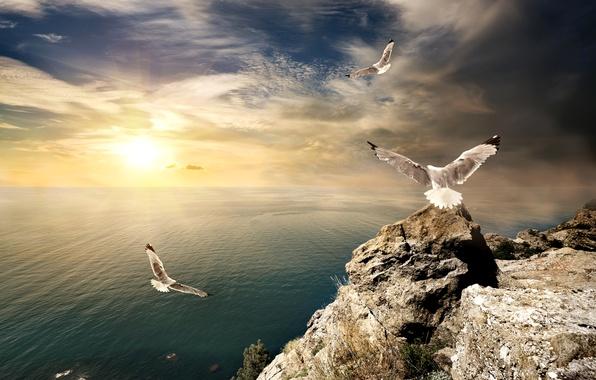 Picture sea, the sky, the sun, clouds, rays, birds, stones, rocks, dawn, shore, seagulls, horizon, Crimea, …