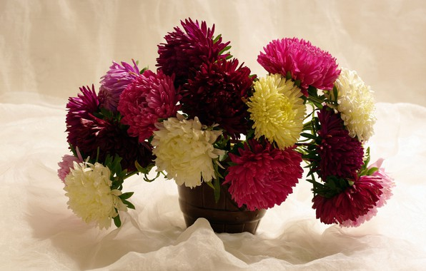 Picture autumn, flowers, nature, beauty, October, a bunch, holidays, congratulations, many, composition, flora, bouquets, asters
