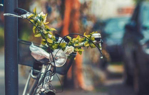 Picture flowers, bike, the city, street, basket, headlight, lantern, bicycle