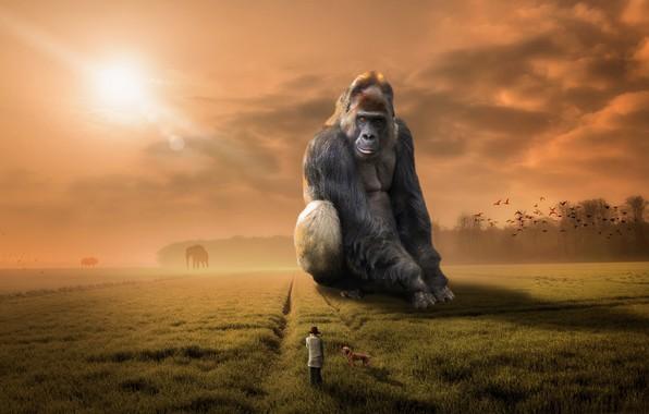 Picture people, dog, monkey, gorilla