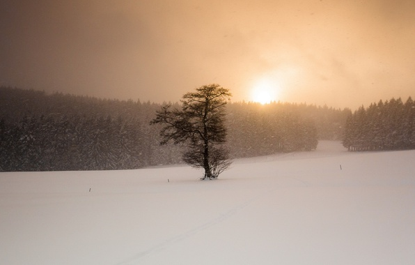 Picture winter, field, snow, sunset, tree, Blizzard