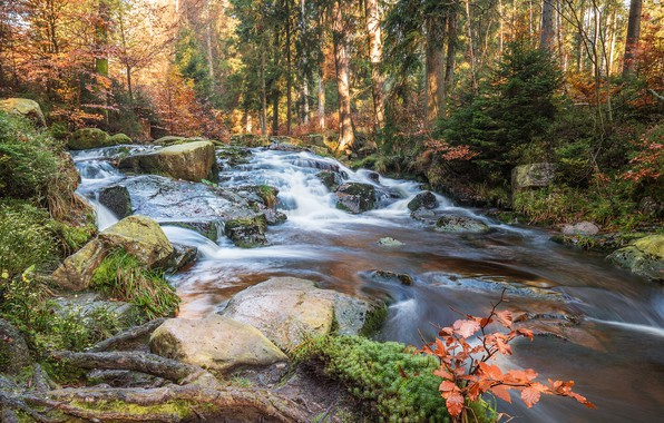 Photo wallpaper autumn, forest, grass, the sun, trees, stream, stones, moss, Germany, the bushes, Selkefall