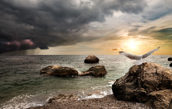 Picture sea, the storm, the sky, the sun, clouds, stones, rain, bird, shore, lightning, photoshop, Seagull, …