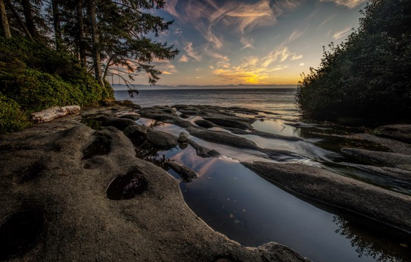 Picture trees, fog, coast, morning, Canada, Bay, Vancouver Island, National Parks