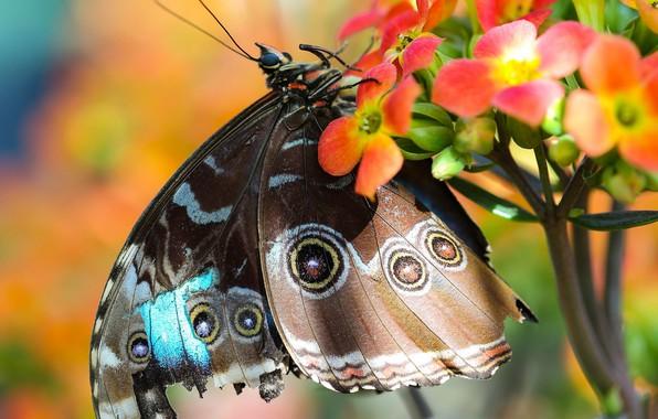 Picture flower, macro, butterfly, bokeh