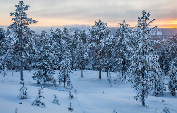 Picture winter, forest, sunset, Finland, Rovaniemi