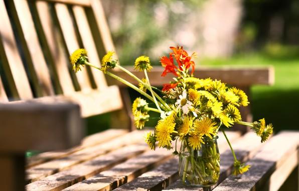 Picture summer, Bank, dandelions