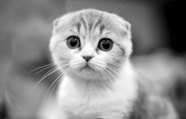 Picture kitty, cute, Yulia Stahovskaya