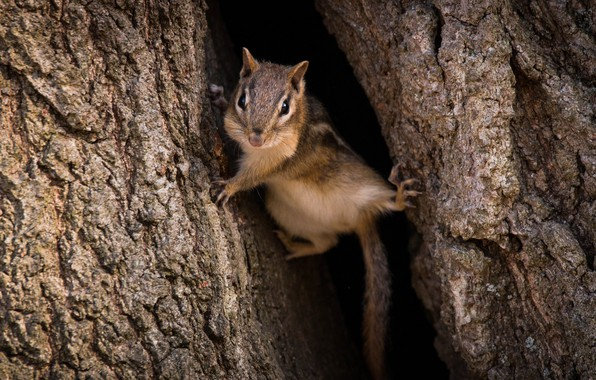 Picture tree, Chipmunk, funny