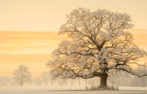 Picture winter, light, snow, nature, tree, morning, Germany, photographer, haze, oak, Lars van de Goor