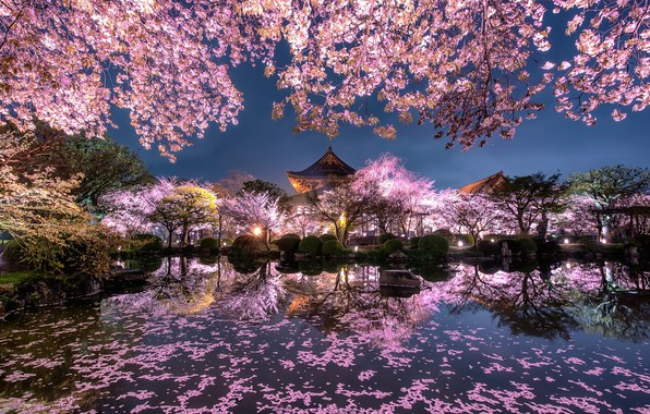 Picture light, flowers, night, the city, lights, pond, spring, Japan, garden, Sakura