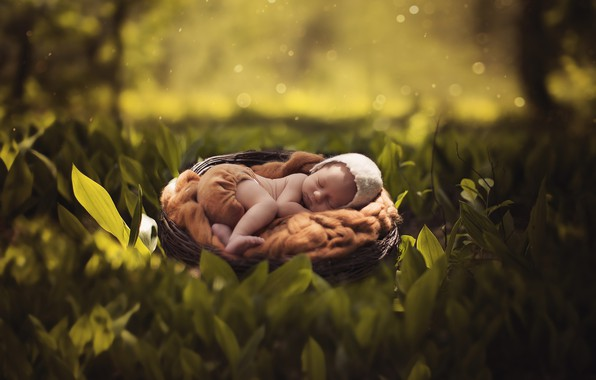 Picture summer, leaves, nature, child, sleep, socket, summer, nature, cap, baby, leaves, bokeh, bokeh, cap, child, …