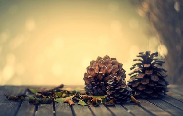 Picture autumn, leaves, mood, bumps, bokeh