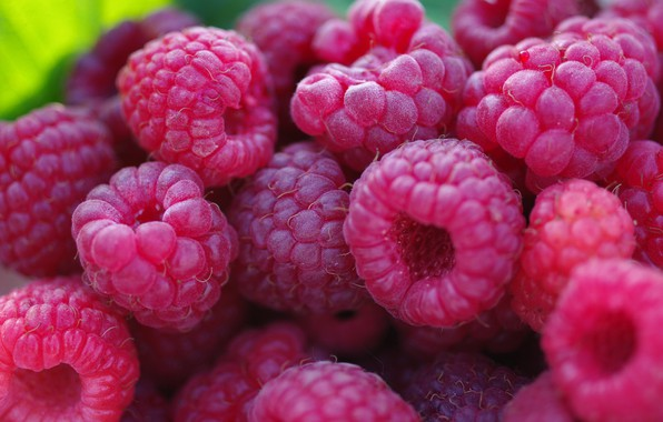 Picture autumn, macro, nature, berries, raspberry, beauty, positive, harvest, sweet, dessert, September, many, cottage, treat, delight