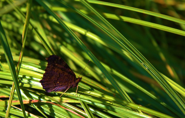 Picture summer, grass, macro, butterfly