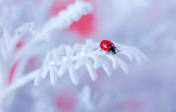 Picture flower, background, ladybug