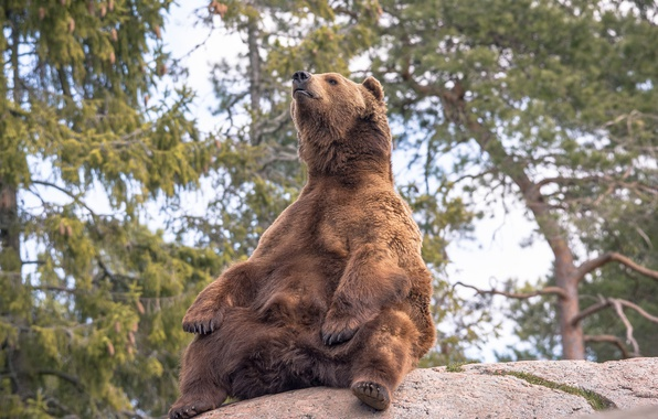 Picture pose, stone, bear, giant