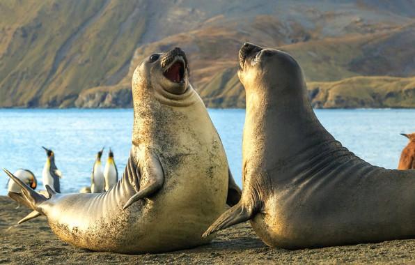 Picture penguins, elephant, seals, The South Sandwich Islands