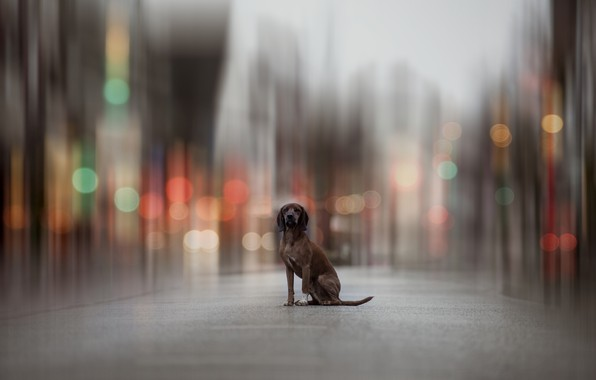 Picture the city, dog, bokeh