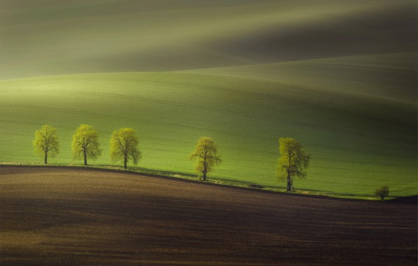 Picture trees, nature, hills, field, spring