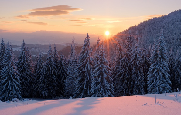 Picture winter, forest, the sky, the sun, clouds, rays, snow, landscape, sunset, dawn, beauty, ate, the …