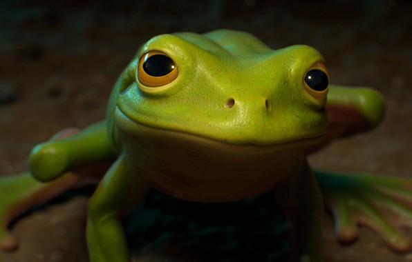 Picture frog, art, children's, julien nicolas, McDONALD'S COMMERCIAL