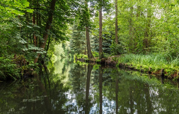 Picture forest, Germany, river, Spreewald