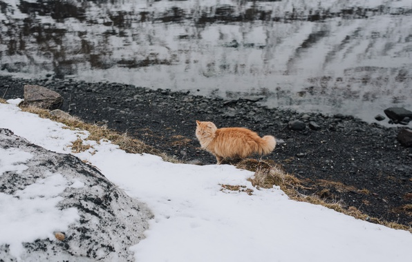 Picture cat, snow, wool, red