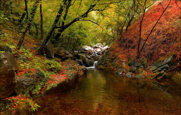 Picture Autumn, Trees, Forest, Fall, River, Autumn, River, Forest, Trees