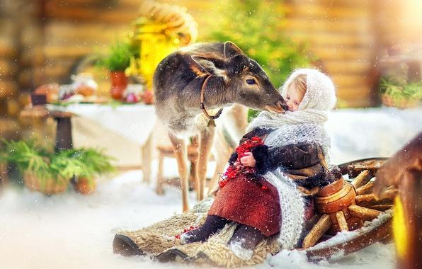 Picture winter, snow, berries, tenderness, deer, wheel, girl, fur, Kalina