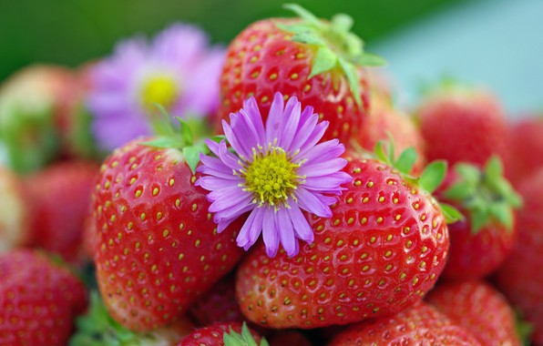Picture autumn, flowers, nature, berries, beauty, positive, harvest, strawberries, strawberry, dessert, vitamins, September, cottage, treat, red, …