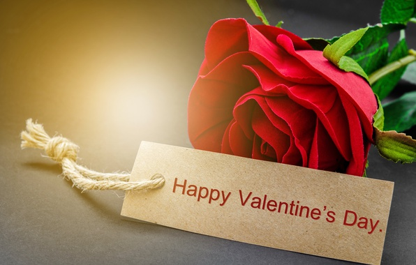 Picture red, love, rose, romantic, gift, valentine`s day