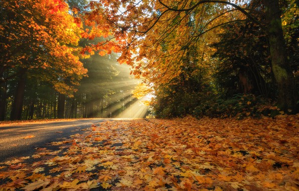 Picture road, autumn, forest, leaves, rays, trees, foliage, Canada, Vancouver, Canada, British Columbia, Stanley Park, Vancouver, …