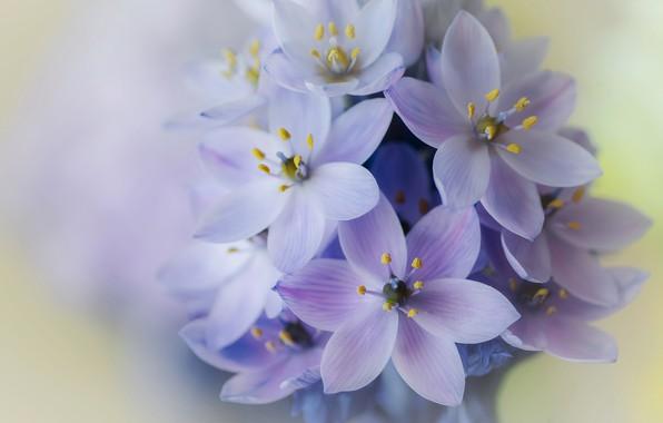 Photo wallpaper macro, petals, inflorescence