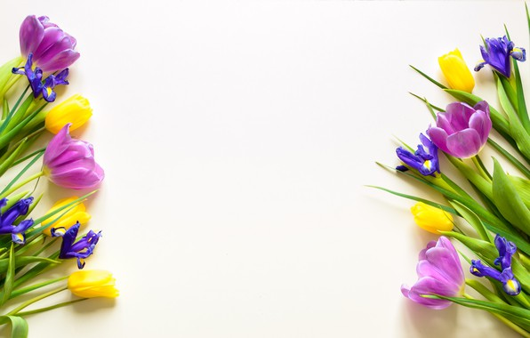 Picture background, Flowers, spring, tulips, irises