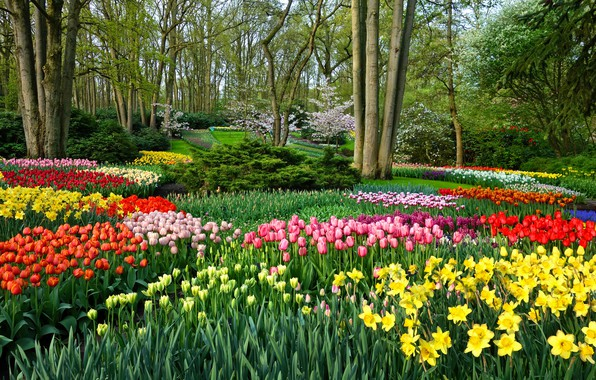 Picture greens, leaves, trees, landscape, flowers, nature, Park, mood, bright, beauty, positive, spring, garden, tulips, colorful, ...
