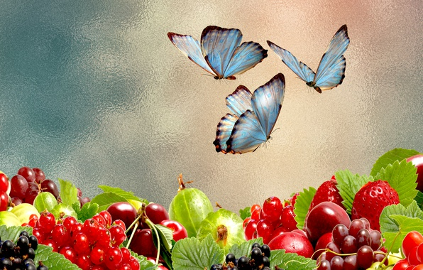 Picture berries, mood, butterfly, the Wallpapers